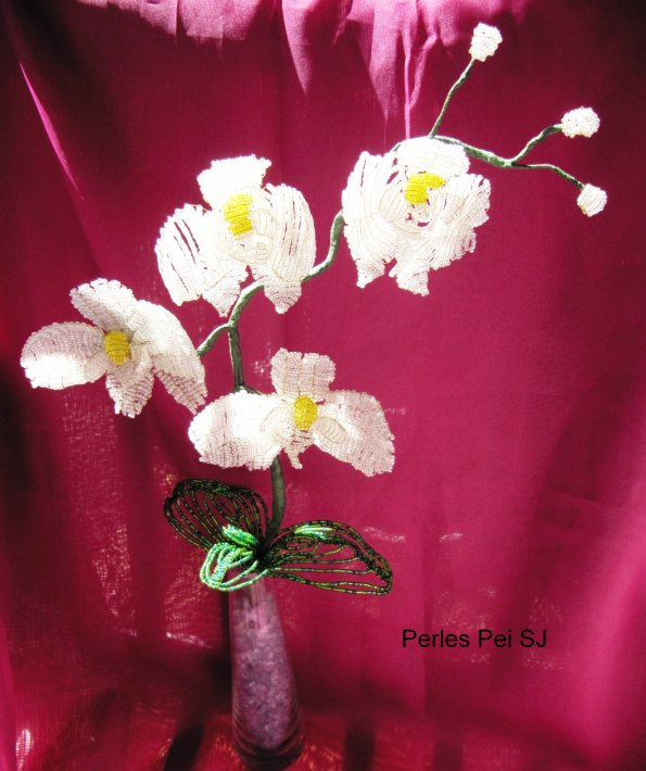 orchidee-blanche-grappe-5